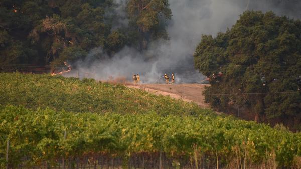 Firefighters protect a vineyard in Santa Rosa, Calif., on Wednesday.