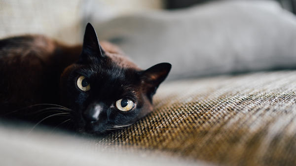 It's Friday the 13th, watch out for black cats!