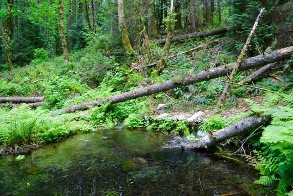 <p>Nestle has proposed to bottle millions of gallons of water from Oxbow Springs in Cascade Locks.</p>
