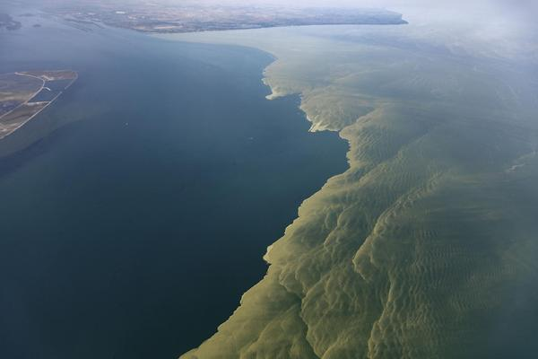 """Attack of the Green Slime"" -- An algae bloom spread over much of western Lake Erie, prompting fears of contaminated drinking water."