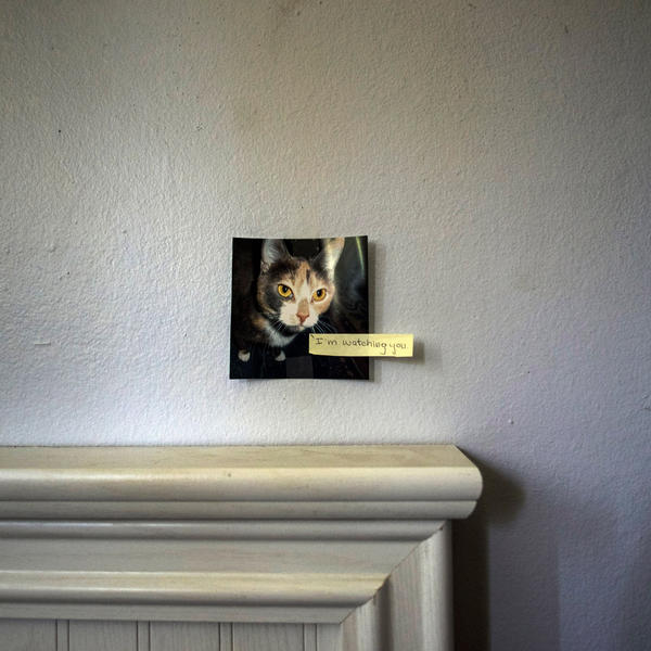 """Meghan keeps a photo of her cat, Boo, on the wall in her bedroom. """"She would stay in her room and keep to herself,"""" Kathy, Meghan's mother, says. """"Sometimes that was a good thing because her depression just sucked the life out of you."""""""