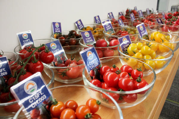 At the headquarters of Mastronardi Produce, new tomato varieties are available for tasting.