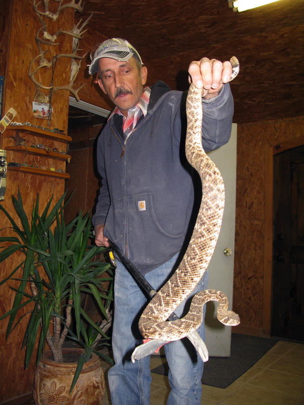 Howard Ellett, a champion snake wrangler from Burnet County, Texas, displays one of 60 Western diamondbacks he keeps at his house, ready to sell to customers.