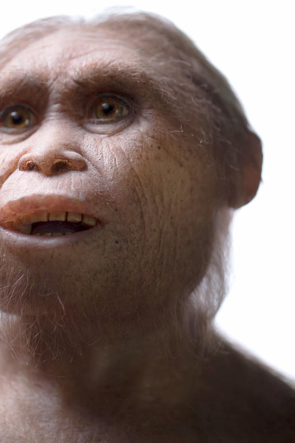 A reconstruction of <em>Homo floresiensis</em> by Atelier Elisabeth Daynes.