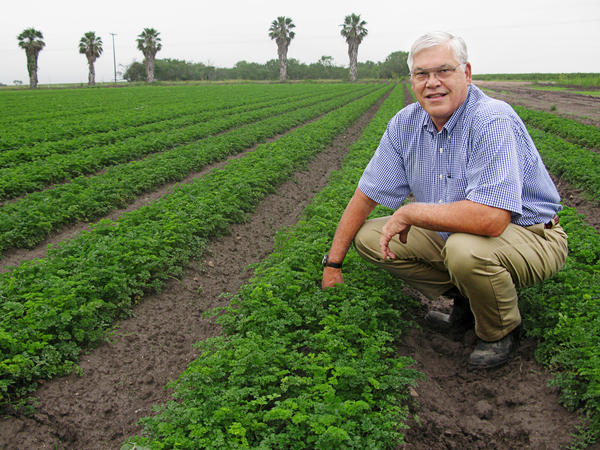 Frank Schuster, squatting in a parsley field, is a lifelong grower in the Rio Grande Valley and owns Val Verde Vegetable Co.