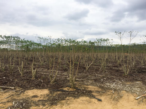 "Naygney Assu's farm in Espirito Santo state in eastern Brazil has suffered from years of droughts. ""We've had no rain since last December,"" says Assu. ""And my well dried up. There was nothing we can do, except wait for rain."""