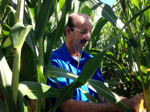 Stephen Denys, an executive at a small seed company, is conducting an experiment with neonic-coated seeds.