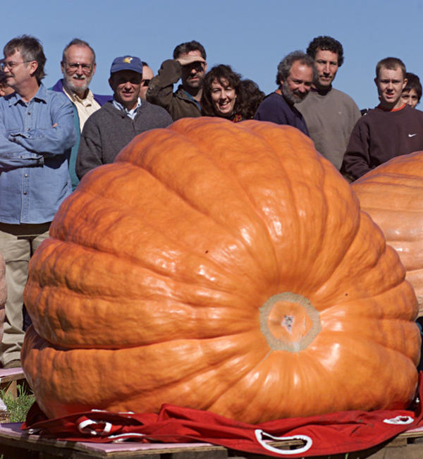 Spectators at the 9th Annual Rhode Island Giant Pumpkin Championship look over a 644 pound pumpkin grown by Joe Jutras of Scituate, R.I. on Oct. 14, 2002.