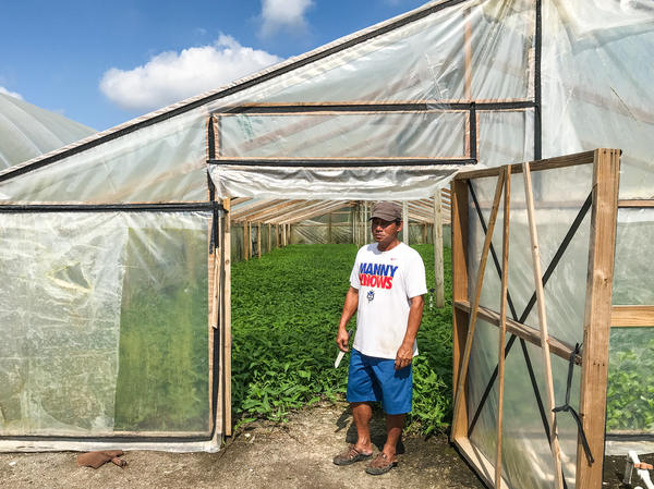Water spinach is the main source of income for most Cambodian-American families in Rosharon, Texas. But Vuth Yin says rebuilding his home after flooding from Hurricane Harvey has kept him from farming.