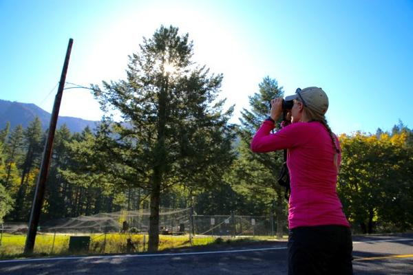 <p>Johanna Varner stops at a roadside in Cascade Locks trying to get a view of her pika research sites in the Columbia River Gorge.</p>