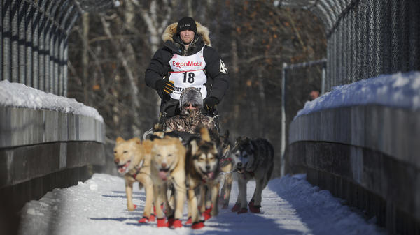 Four-time and defending champion Dallas Seavey mushes during the ceremonial start of the Iditarod Trail Sled Dog Race in Anchorage, Alaska, on March 4. Seavey has faced recent accusations of doping, which he denies, and animal cruelty, which local officials say is not supported by evidence.