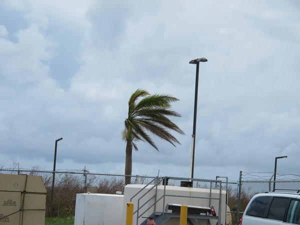 Palm trees remain windblown more than a week after Hurricane Maria struck St. Croix.
