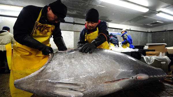 Fish market workers in Jersey City, N.J., prepare a bluefin tuna for shipment to some of New York's top sushi restaurants.
