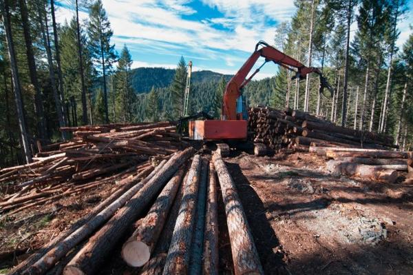 <p>A contractor sorts logs on Oregon Board of Forestry land in southern Oregon. </p>