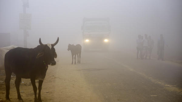 Cattle stand by the side of a road as a truck drives through smog in Greater Noida, near New Delhi, on Wednesday.