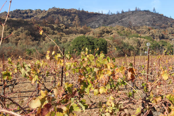 Charred hills are near vineyards in Sonoma Valley, Calif. on Nov. 7, 2017. Local wineries such as Buena Vista were close to the flames.