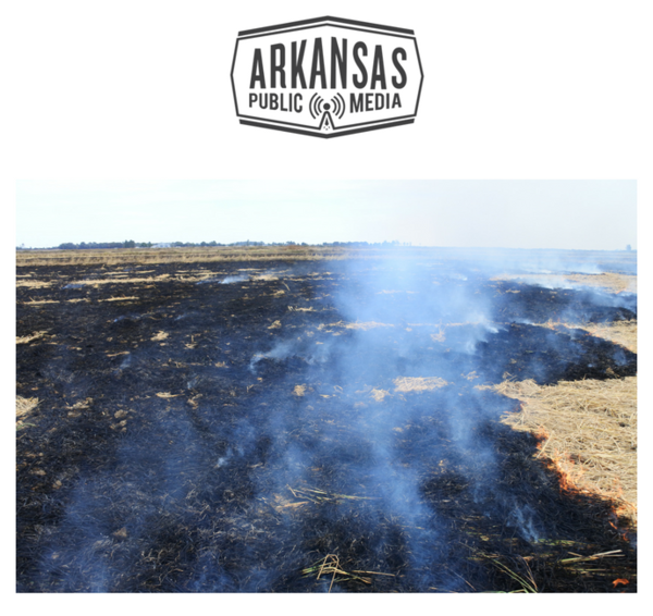 Smoke lingered after a field burn in Mississippi County in October 2017.