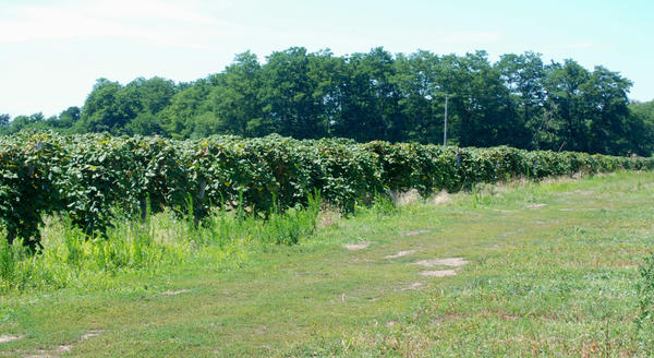 21 Brix Winery and farms in western New York.