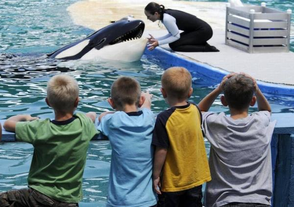 A group of children from Ozark, Missouri, watch Seaquarium training manager Heather Keenan interact with Lolita after their afternoon show on Sept. 1, 2010.
