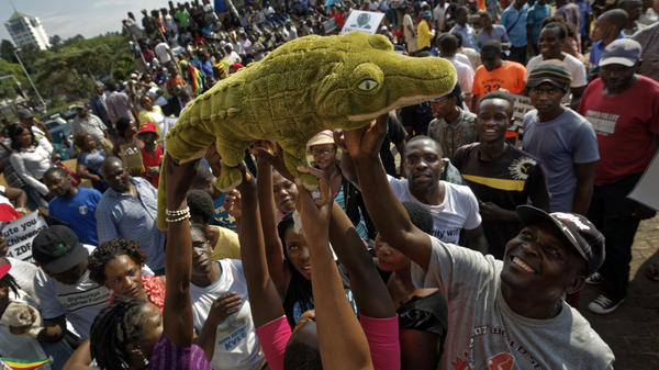 "Supporters of Zimbabwe's Mnangagwa, known as ""The Crocodile,"" raise a stuffed crocodile in the air as they await his arrival at the ZANU-PF party headquarters in Harare, Zimbabwe on Wednesday. Mnangagwa has emerged from hiding and returned home ahead of his swearing-in Friday. Crowds gathered at the ruling party's headquarters for his first public remarks."