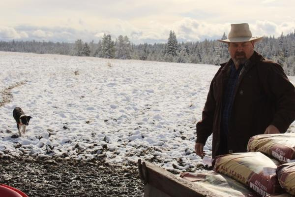 <p>Todd Nash unloads bags of mineral feed for his cattle in a pasture where he's had multiple wolf attacks. After Nash and other ranchers petitioned for wolves from one pack to be killed, another moved in and kept preying on cattle.</p>