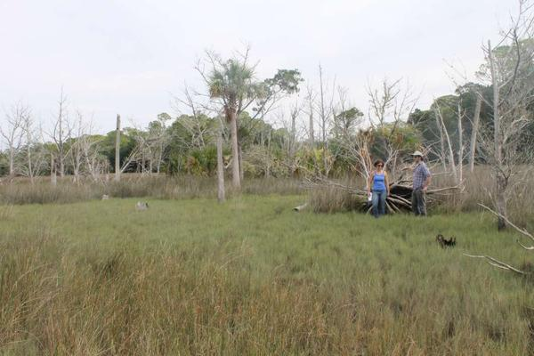 University of Florida scientist David Kaplan and Ph.D. student Katie Glodzik are studying ghost forests like this one at the Withlacoochee Gulf Preserve