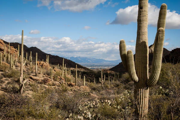 Tucson is only a few miles away from the cacti-lined canyons of Saguaro National Park, but few of its residents make the trip. The park is aiming to change that.