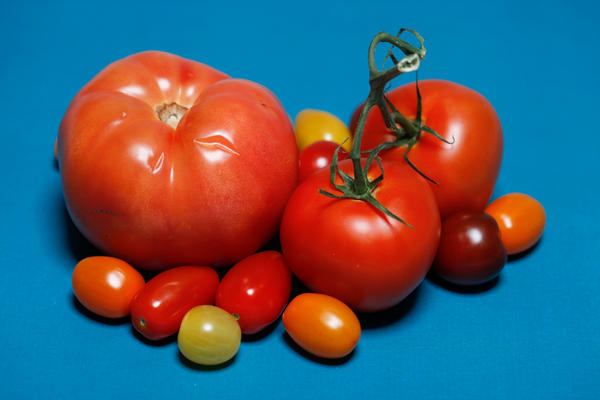 Tomatoes from Canada, Mexico and Florida