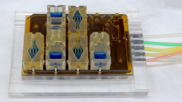 EVATAR is a book-size lab system that can replicate a woman's reproductive cycle. Each compartment contains living tissue from a different part of the reproductive tract. The blue fluid pumps through each compartment, chemically connecting the various tissues.