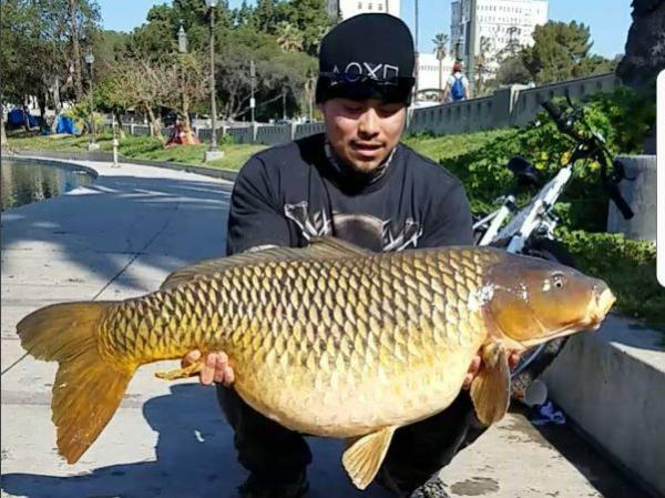 Eddie Salmeron of the California Ghetto Carping club holds the 50-pound carp he caught in Los Angeles' MacArthur Park.