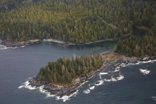 The Tongass National Forest, near Ketchikan, Alaska. The spruce, hemlock and cedar trees of the Tongass have been a source of timber for the logging industry.