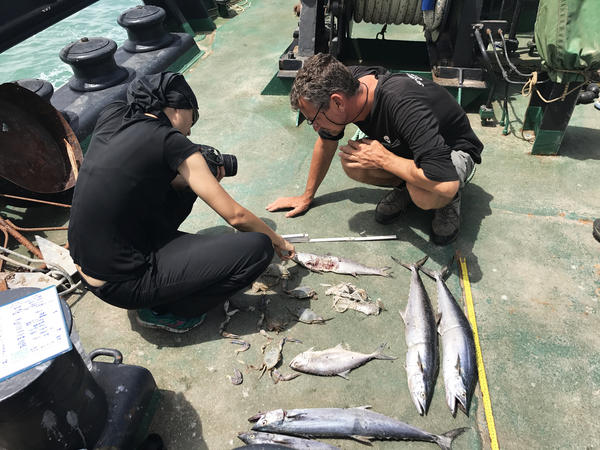 Crew members from Sea Shepherds cut up and separate more than 300 pieces of illegal fishing gear they've retrieved from the water. The recovered nets are shipped off to a company that turns them into consumer products, including Adidas shoes.