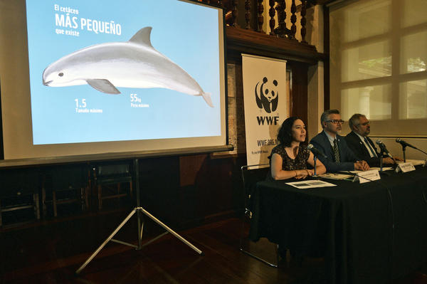 Directors of the World Wide Fund for Nature in Mexico Maria Jose Villanueva (left), Jorge Richards and Enrique Sanjurjo speak about the vaquita during a press conference in Mexico City on May 15.