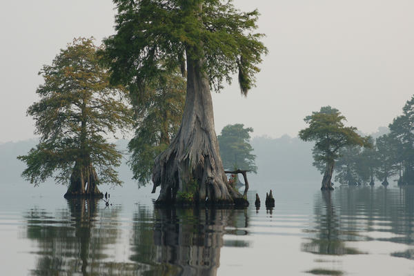 The Great Dismal Swamp National Wildlife Refuge in North Carolina and Virginia has been dramatically altered over the past few centuries by human development.