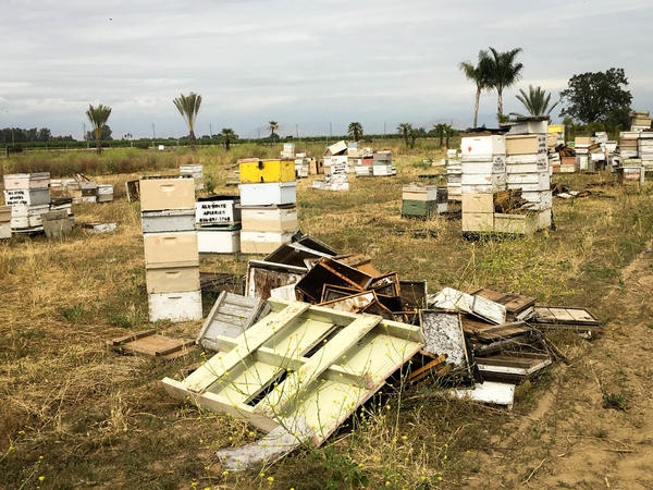 "Earlier this year, California authorities uncovered this ""beehive chop-shop"" in a field in Fresno County. A single bee is worth a fraction of a cent, but there can be as many as 65,000 bees in each hive."