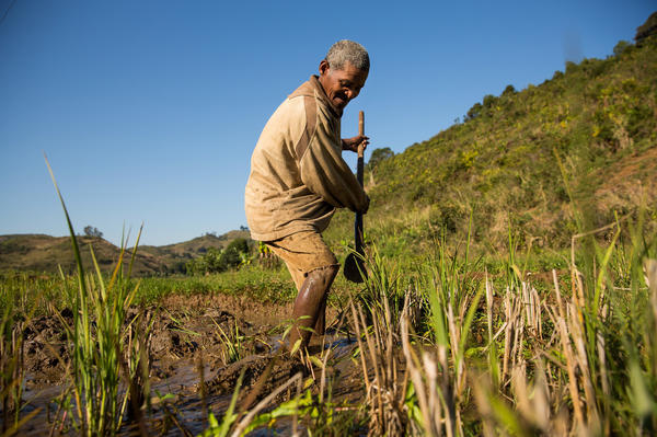 Jeanpier Marolahy has farmed rice all of his life in eastern Madagascar. The 56-year-old says the weather has definitely changed from when he was a boy. Rains are more erratic and cyclones more frequent.