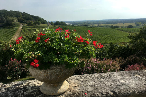 One of many vineyards in the French wine making region of Bordeaux. Chinese investment in the region is changing wine production and exports.