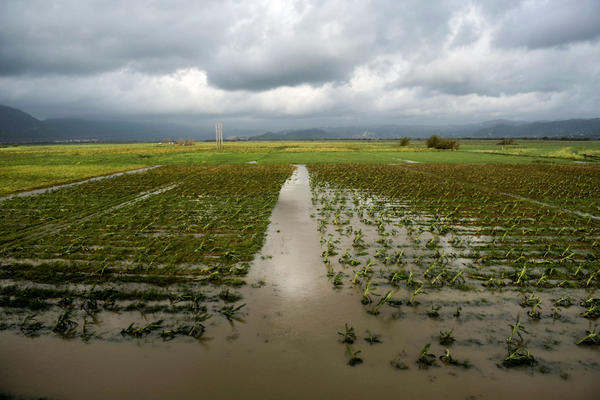The hurricane knocked out power to millions and destroyed water infrastructure. It also tore up plants across the island, washed soil off fields and knocked down fences.