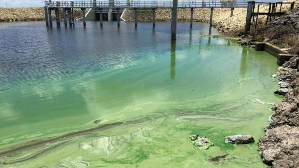 Blue-green algae in Palm Beach County. State water managers are in the midst of planning a reservoir that would reduce discharges of contaminated water from Lake Okeechobee, which can worsen algae blooms.
