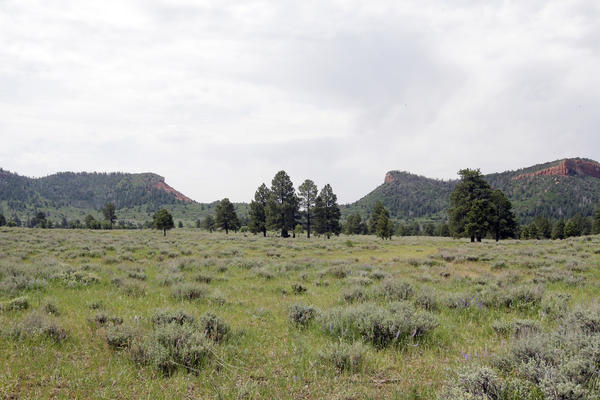 """In this June 22, 2016, photo, the """"Bears Ears"""" buttes are shown near Blanding, Utah. U.S. Interior Secretary Sally Jewell is visiting the area this week for a fact-finding mission to meet with proponents and opponents marking the latest indication the Obama administration is giving serious consideration to the """"Bears Ears"""" monument proposal that has become the latest battleground in the Western public lands debate. (AP Photo/Rick Bowmer)"""