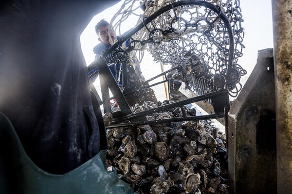 Francisco Vasquez at work on the Prestige Oysters boat The Diplomat.