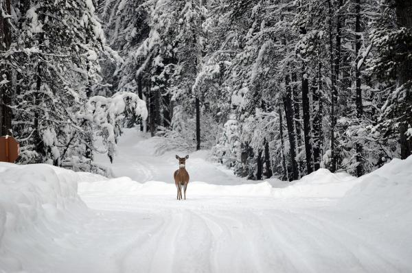 Due to budget cuts, some state park roads that are normally plowed in winter will only be accessible by foot this season.