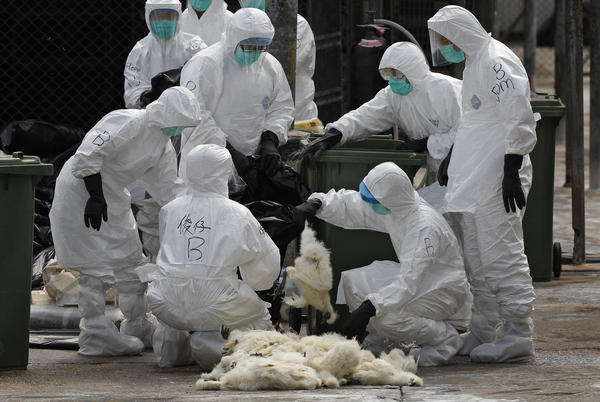 Health workers killed chickens in a Hong Kong market in 2014 in an effort to stop the spread of H7N9 flu. It's being watched closely as a virus that might spark a pandemic outbreak.