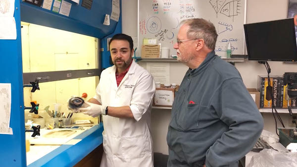 Leandro Teixeira and Richard Dubielzig of the University of Wisconsin - Madison open the whale eye package.