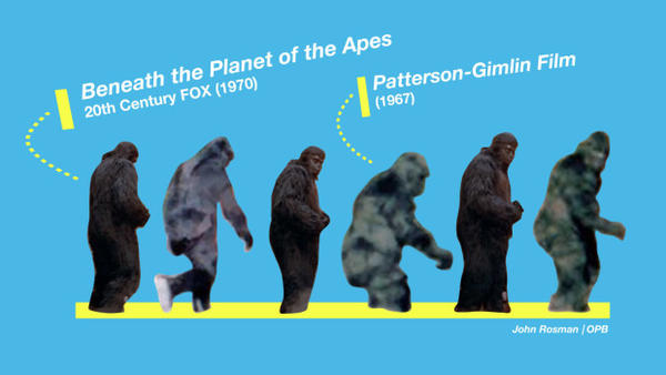 <p>Dr. Jeff Meldrum compares the surface anatomy between the costumes in Beneath the Planet of the Apes and the Patterson-Gimlin film. He says there's no comparison. </p>