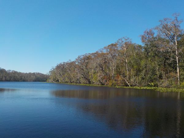 388 acres along Doctors Lake and Black Creek will be preserved.