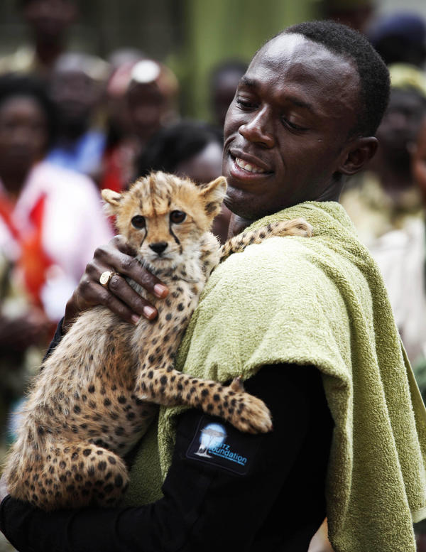 <strong>On Your Mark: </strong>Olympic champion sprinter Usain Bolt holds a three-month-old cheetah cub that he named Lightning Bolt, after adopting the cub at the headquarters of the Kenyan Wildlife Service in 2009. Researchers studying cheetah movements found the animals had incredible acceleration — four times more than that of Bolt's world record run.