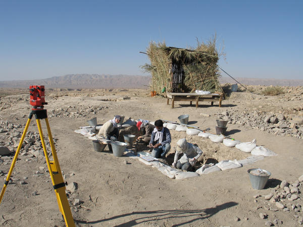 The seeds and other evidence of Stone Age farming, including tools that looked like sickles, were uncovered at a dig site in the foothills of Iran's Zagros mountains.