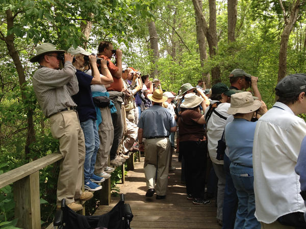 Birders at the Magee Marsh Wildlife Area crowd around to look for a bird.