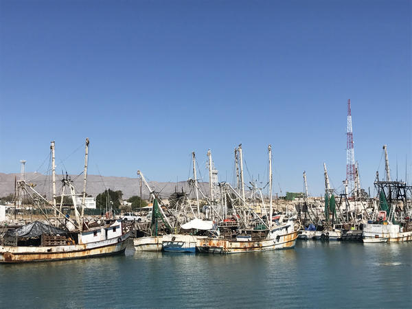 The San Felipe fishing fleet is mostly made up of shrimp trawlers and small boats known as <em>pangas</em> that head out in the Gulf of California.